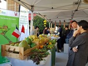Hanoi coopera con grupo francés Semmaris en estudio de construcción de mercado internacional