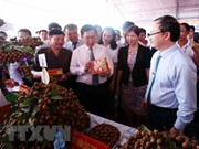 Provincia norvietnamita debe mejorar planificación del cultivo de longán, sostiene Vicepremier