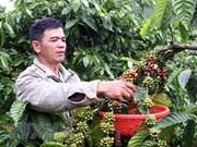 Vietnam publicará libro sobre indicaciones geográficas de productos culturales de la nación