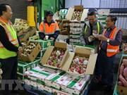 Impulsan aplicación del código QRcode en comercio de frutas en Hanoi