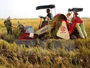 Provincia de Tay Ninh urgida a convertirse en centro de procesamiento de productos agrícolas de Vietnam