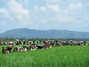 Myanmar alerta inestabilidad regional por riesgos de terrorismo en estado Rakhine