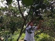 Vietnam acelera aplicación tecnológica en la agricultura