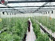 Jóvenes taiwaneses buscan oportunidad de cooperación agrícola en Vietnam