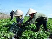 Cooperativas de Vietnam trabajan por elevar eficiencia de sus operaciones