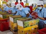 Ascienden 14 por ciento exportaciones hortofrutícolas de Vietnam