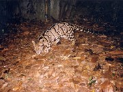 Vietnam fomenta cooperación internacional en preservación de vida silvestre en peligro de extinción