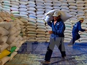 Egipto comprará un millón de toneladas de arroz a Vietnam antes de finalizar este año