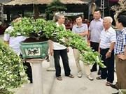 Abren en la provincia vietnamita Quang Ninh primer mercado de plantas ornamentales