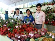 Empresas vietnamitas precisan estudiar mercado chino para guiar exportaciones agrícolas