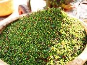 De enero a agosto exportaciones de pimienta vietnamita generan más de 576 millones de dólares