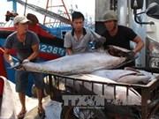 Provincia vietnamita de Thua Thien-Hue dedica 1,5 millones de dólares a favor de pescadores