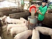 Laos suspende importaciones de carne de cerdo de China