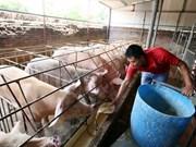 Provincia fronteriza vietnamita adopta medidas contra contagio de peste porcina