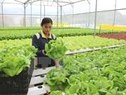 Lam Dong, mayor provincia receptora vietnamita de IED en agricultura de alta tecnología