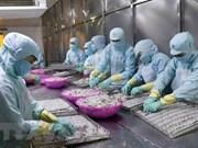 """""""Tarjeta amarilla"""" afecta exportación de productos acuáticos vietnamitas a Unión Europea"""