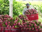 Promueven venta de pitahaya vietnamita en mercado indio