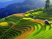 Celebrarán semana cultural y festival de terrazas de arroz en provincia vietnamita
