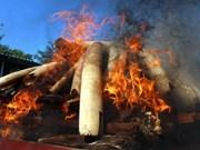 Myanmar destruye una tonelada de productos de animales salvajes de contrabando