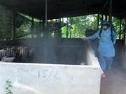 Debaten en Hanoi medidas preventivas contra la peste porcina africana