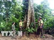 Proyectan recaudar fondo millonario de servicios forestales en Vietnam