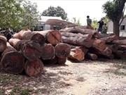 Vietnam y Camboya trabajan contra el comercio ilegal de madera