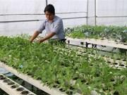 Vietnam y la India aspiran a agilizar lazos en agricultura de alta tecnología