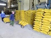 Exportadores de arroz vietnamitas por contrarrestar impactos de guerra comercial Estados Unidos- China
