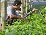Grupo vietnamita FLC planea ampliar su participación en sector agrícola
