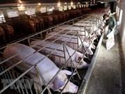 Sector ganadero amplía su cobertura a mercados más grandes