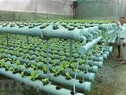 Vietnam e Israel robustecen lazos en la aplicación de tecnologías modernas en agricultura