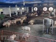 Inauguran fábrica de pienso en provincia norvietnamita de Ha Nam