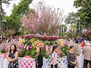 Urbe vietnamita de Da Lat se embellecerá con flores de cerezo de Japón