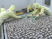 Primer centro de producción de cría de camarón vietnamita cumple estándar internacional