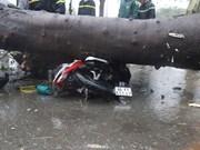 Tifón Usagi azota el Sur de Vietnam y deja un fallecido y grandes pérdidas materiales