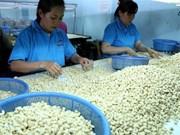 Vietnam necesita reestructurar la producción de anacardo, según expertos