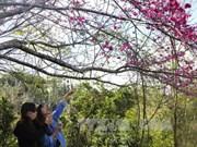 Provincia norvietnamita de Dien Bien espera recibir a más de 800 mil turistas en 2019