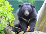 Cortometraje destaca los esfuerzos en curso de protección de osos en Vietnam