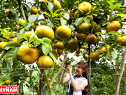 Promoverán el uso de productos nacionales en la feria de frutas en Hanoi
