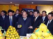 Premier de Vietnam insta a provincia norteña a convertirse en fuerza motriz para desarrollo regional