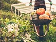 Vietnam mejora control de pesticidas en productos agrícolas para impulsar ventas a Seúl