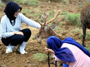 Indonesia fija meta de convertirse en mejor destino mundial de turismo halal