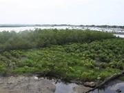 Fortalecen resiliencia ante cambio climático en zonas litorales de Vietnam