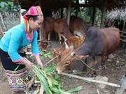 Vietnam impulsa cooperación en bienestar social con organizaciones no gubernamentales