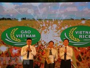 Debaten medidas para desarrollar la marca comercial del arroz vietnamita