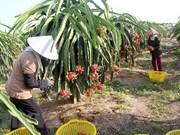 EVFTA facilita entrada en mercados europeos de productos agrícolas vietnamitas