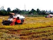 Vietnam ingresará más de tres mil 150 millones de dólares por ventas de arroz en 2018