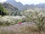 Meseta Moc Chau de Vietnam atrae a turistas por homestay únicos