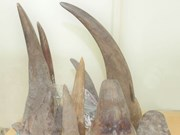 Exhortan a reforzar lucha contra contrabando de animales silvestres en Vietnam