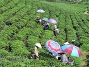 Tailandia busca oportunidades de colaborar con provincia vietnamita
